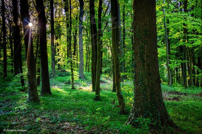 Klinter Wald II