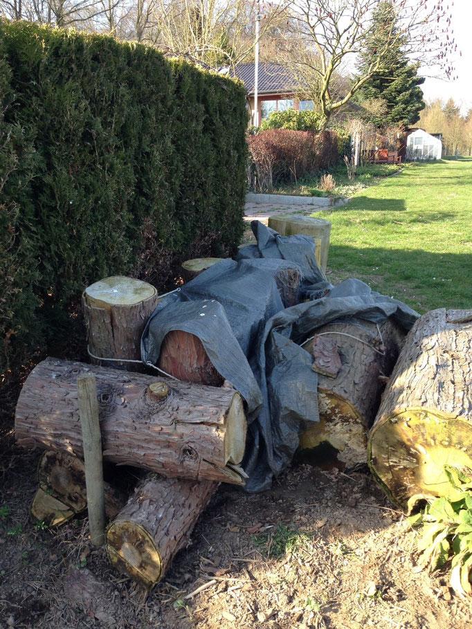 Massivholz für Sitzgarnitur