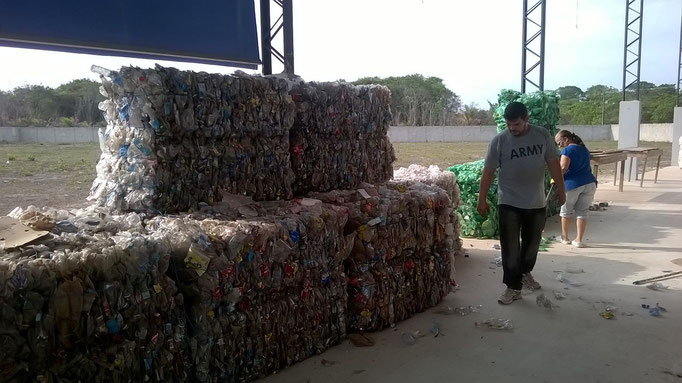 first pressed bales (january 2016)