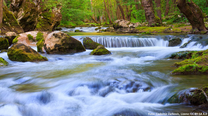 Reka (Slowenien)