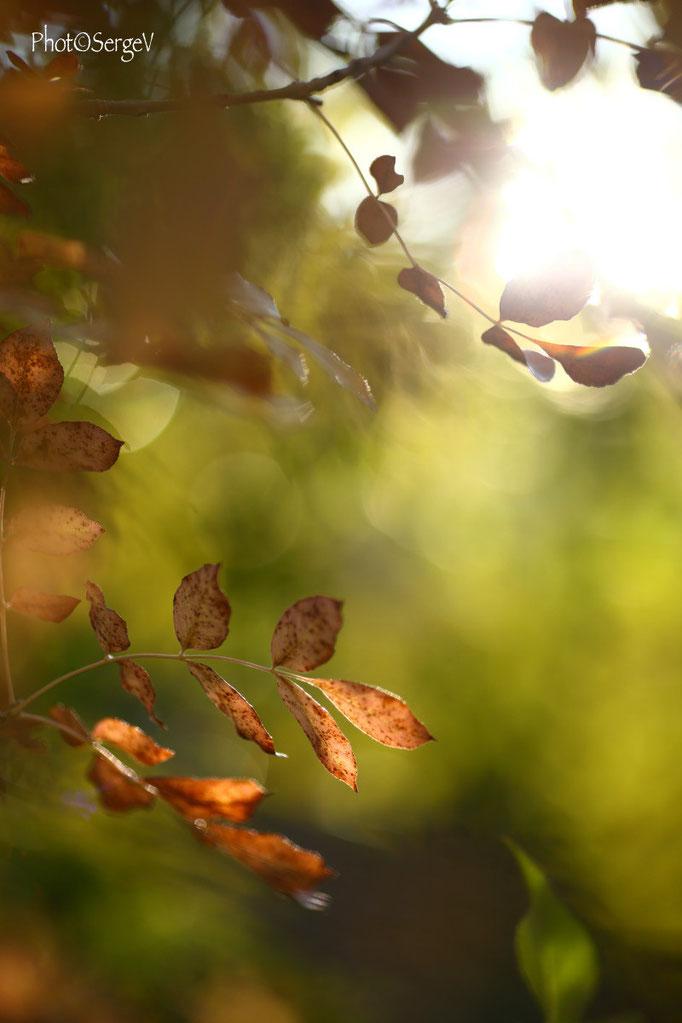 Fin d'automne- Canon 6d-Canon 135 f2