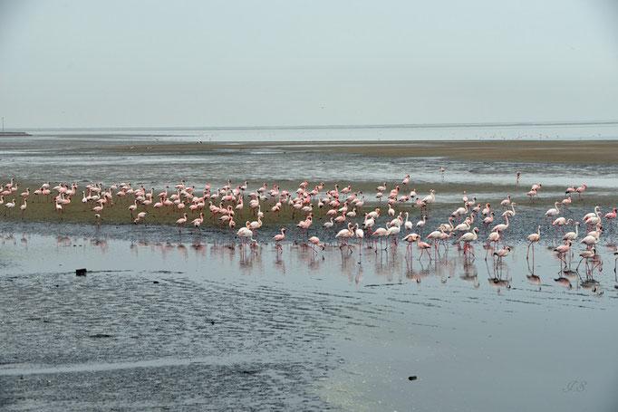 Flamingos bei der Walvis-Bay
