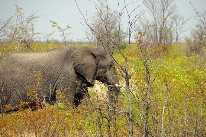 endlich ein Elefant...