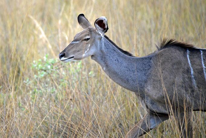 Mahango- Nationalpark