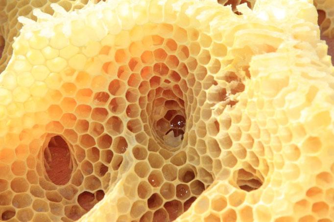 Mes abeilles ont bâti dans le couvre-cadre nourrisseur !