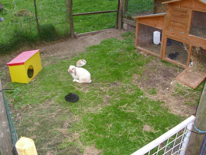 Kaninchen sind einfach entspannter und gelassener, wenn sie sich viel bewegen können. Scheuer sind sie dadurch definitiv NICHT