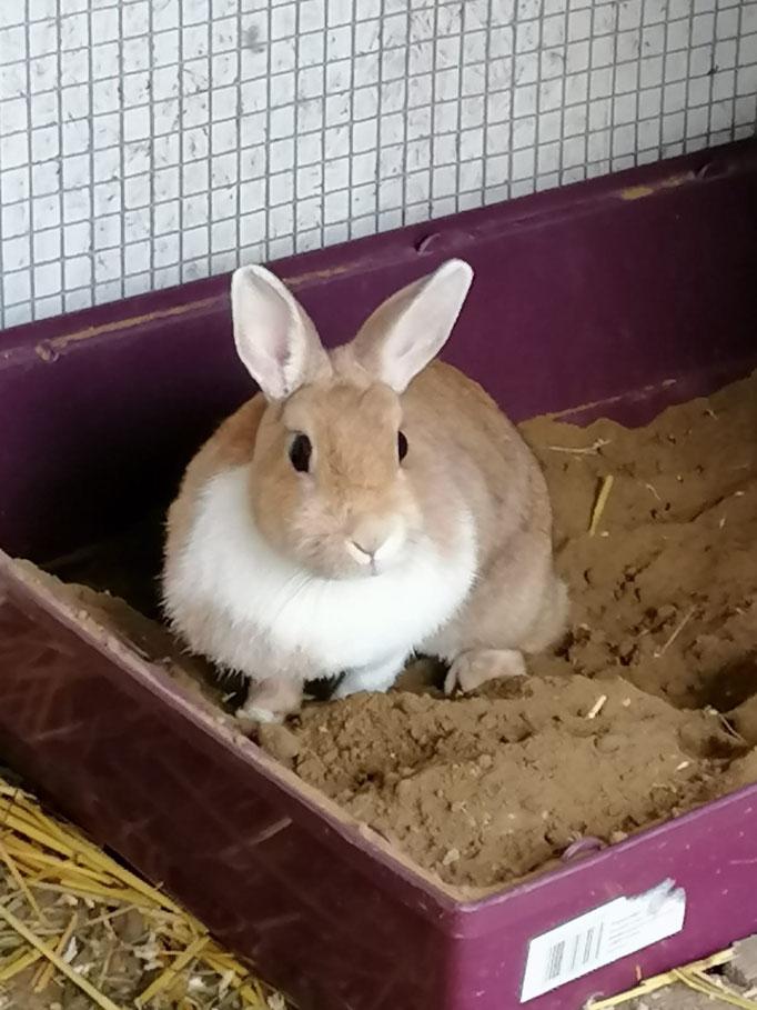 partnersuche für kaninchen)