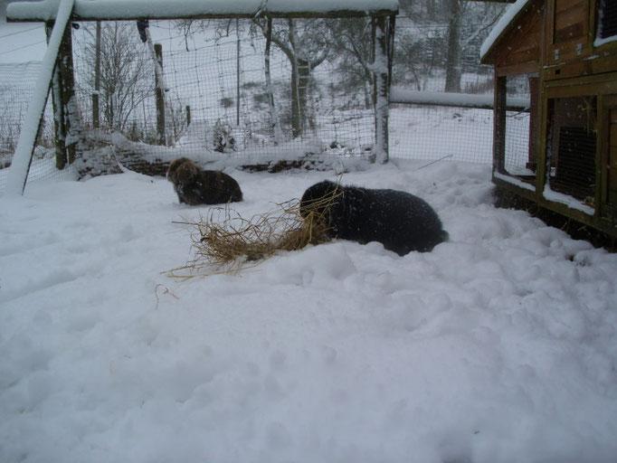 Kaninchen lieben Schnee