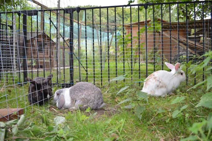Estrichmatten, Kamingitter oder Kompostgitter sind fast einen Meter hoch und sicherer als Kaninchengitter von 60 cm Höhe