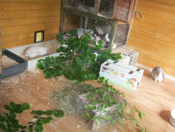 Holzhütten kann man auch prima umbauen. Aus einer Katzenklappe wird eine Hasiklappe ;)