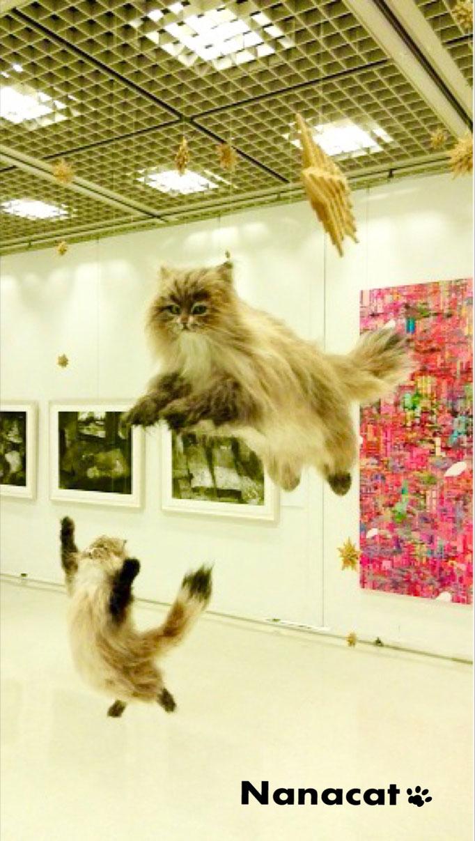 【願い】2018,5 東京芸術劇場ギャラリー展示 虹の橋を渡った姉弟猫達が天国で元気に走り回って遊んでることを願って作りました。