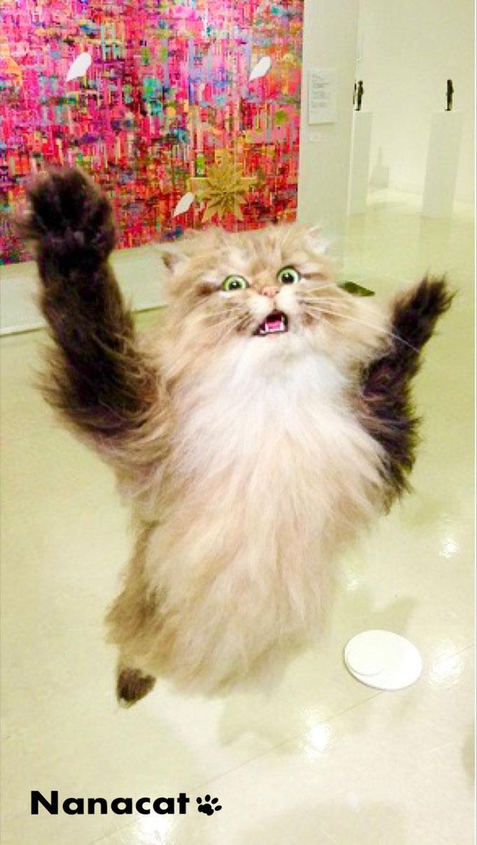 【願い】2018.5 猫3W28cm×D90cm×H45cm 「ちゃちゃ」の姉猫で友人の愛猫だったチンチラゴールデンの「あーちゃん」