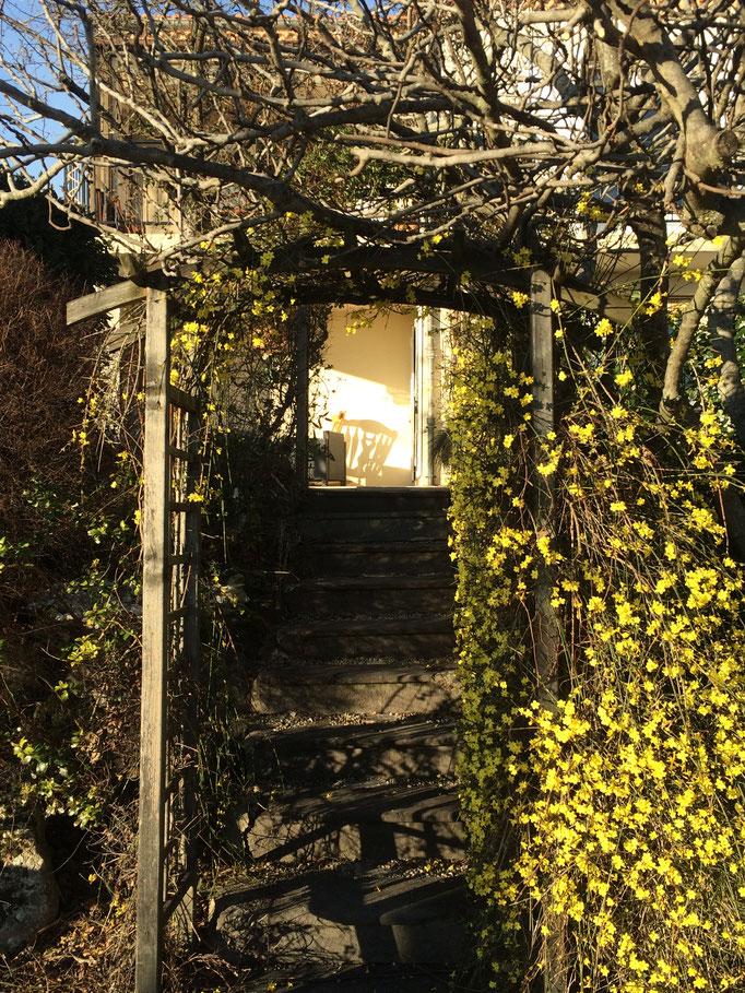 Le jasmin d'hiver du jardin de La Villa Victoria Auvergne