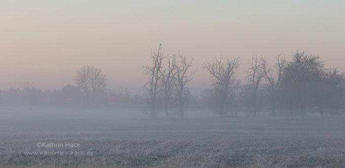 Erster Frost im November