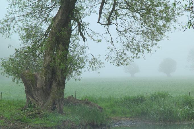 Nebelmorgen im Havelland