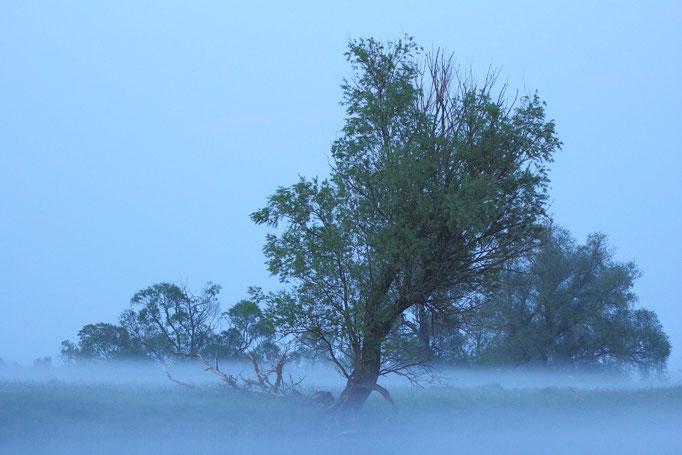 Nebelstimmung im Havelland
