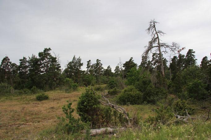 Heidelandschaft im Landesinneren