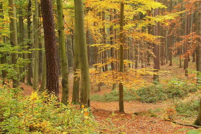 Herbst im Weißenborner Wald