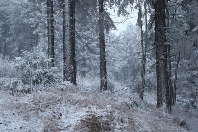 Winterzauber Fichtelberg