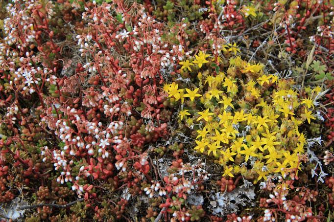 Typische Vegetation der Alvarmark