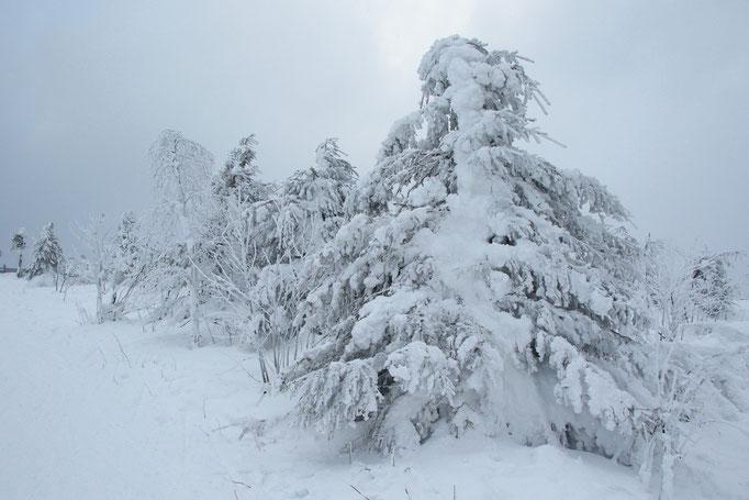 Vereiste Bäume auf dem Fichtelberg