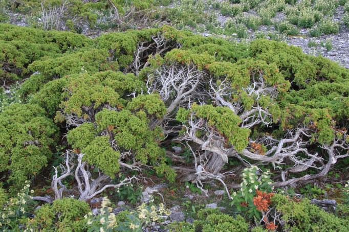 Typische Vegetation der Hällmark