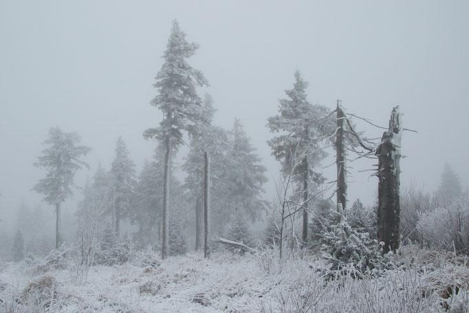 Nebelstimmung Fichtelberg