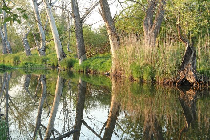 Wasserspiegelung Havel