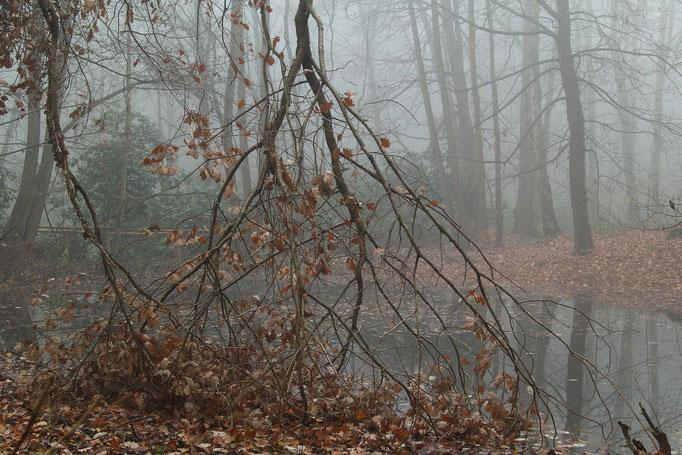 Nebelmorgen/ Weißenborner Wald