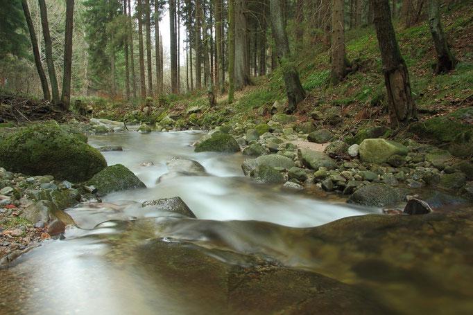 Große Bockau