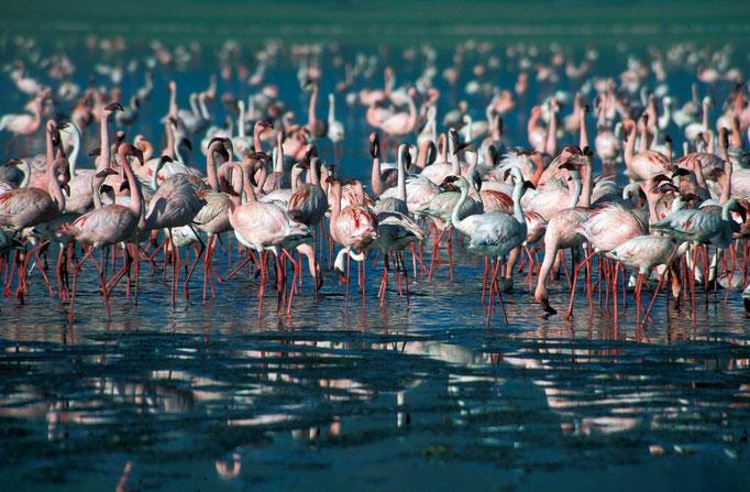 Flamingos im Arusha NP, Kilimanjaro besteigen, Detailinfos Kilimanjaro, Auf den Kilimanjaro, Bergtour Kilimanjaro