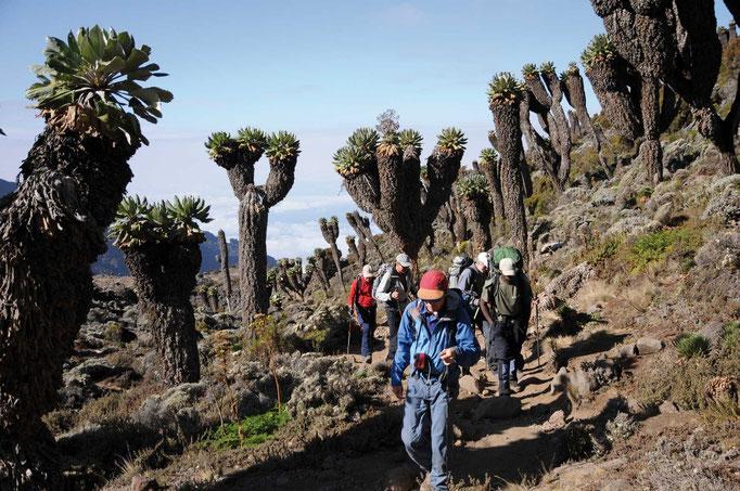 Umbwe Route, Kilimanjaro besteigen, Detailinfos Kilimanjaro, Auf den Kilimanjaro, Bergtour Kilimanjaro
