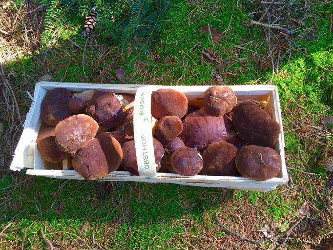Steinpilze aus der Lüneburger Heide,  selbst gesammelt...