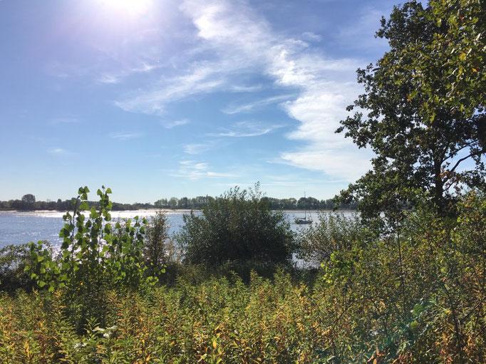 Gegenüber liegt die Elbinsel Neßsand und ist ein Naturschutzgebiet