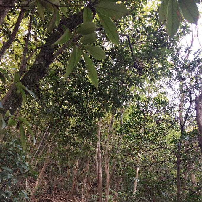 こんなうっそうとした森の中を進んでいきます。