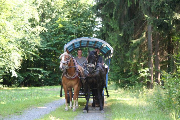 Galan und Havanna am Kremser