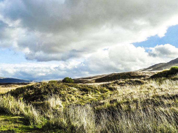 Kirsten: Grasland im Glencoe