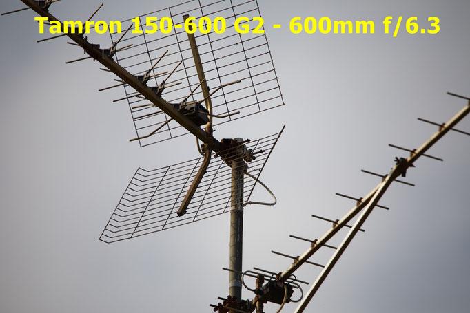 Canon 5DIV + Tamron 150-600 G2 - vignetage - beanico-photo