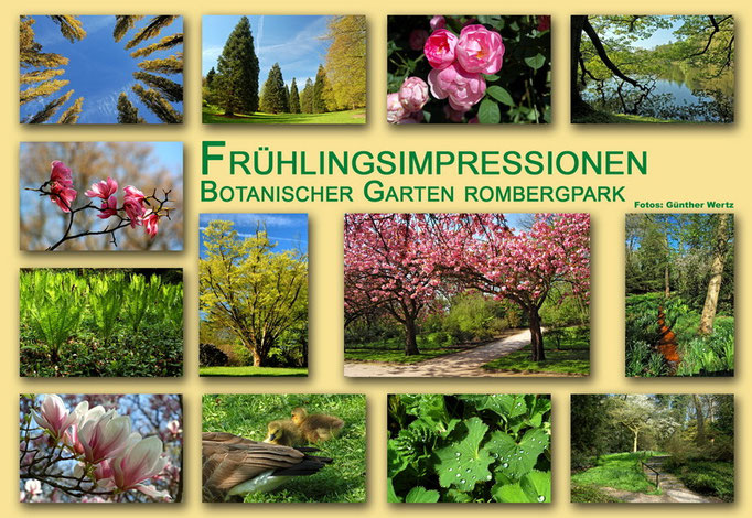 Botanischer Garten Rombergpark, Dortmund - Frühling