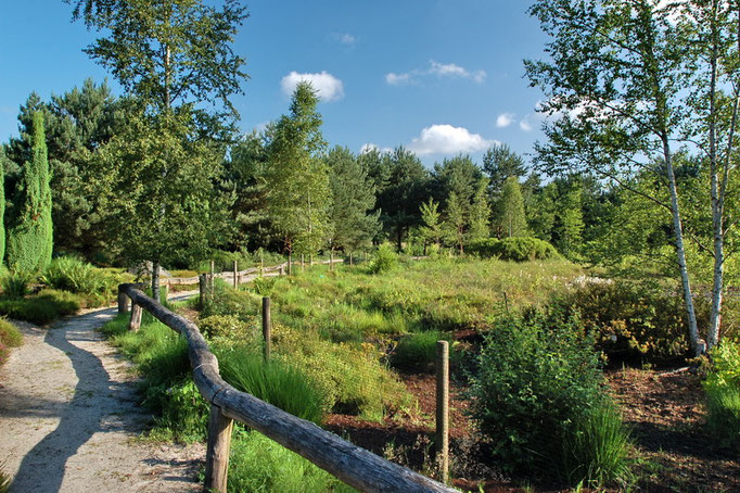 Botanischer Garten Rombergpark, Dortmund - Heidelandschaft