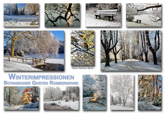 Botanischer Garten Rombergpark, Dortmund - Winter