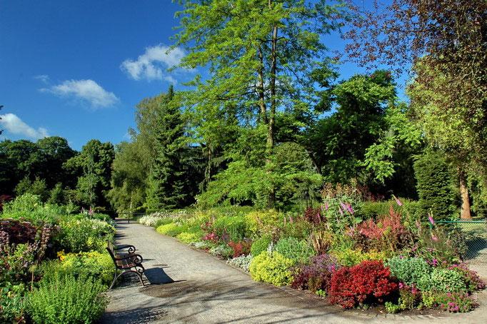 Botanischer Garten Rombergpark, Dortmund - Staudengarten