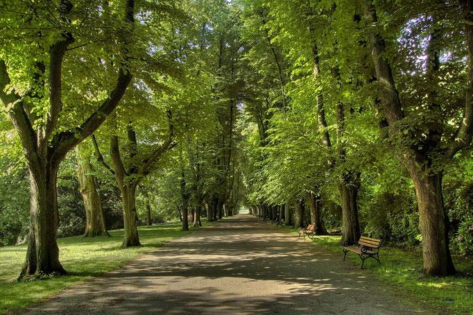 Botanischer Garten Rombergpark, Dortmund - Lindenallee