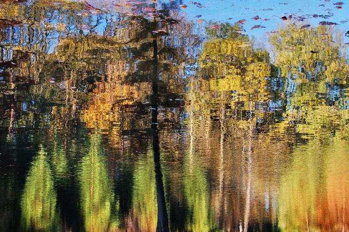 Botanischer Garten Rombergpark, Dortmund - Reflektionen