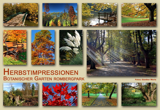 Botanischer Garten Rombergpark, Dortmund - Herbst