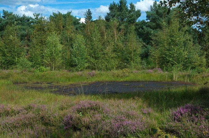Botanischer Garten Rombergpark, Dortmund    Moor - Heide Landschaft