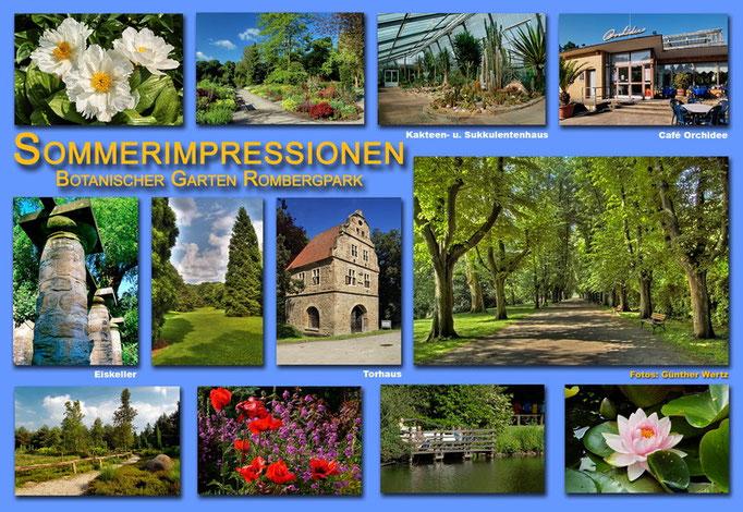 Botanischer Garten Rombergpark, Dortmund - Sommer