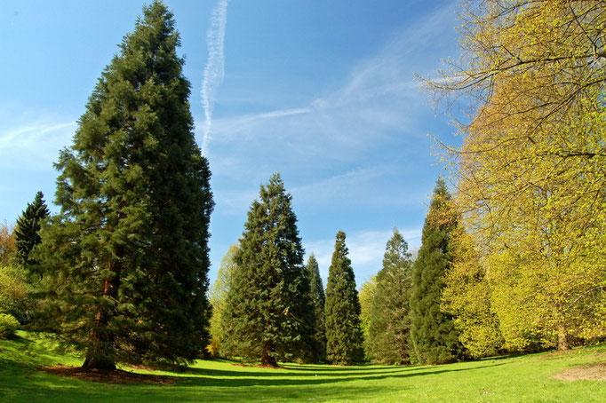 Botanischer Garten Rombergpark, Dortmund - Talwiese