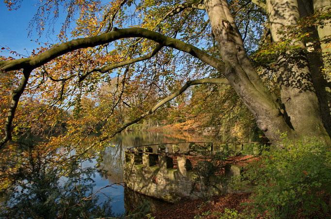 Botanischer Garten Rombergpark, Dortmund - Großer Teich