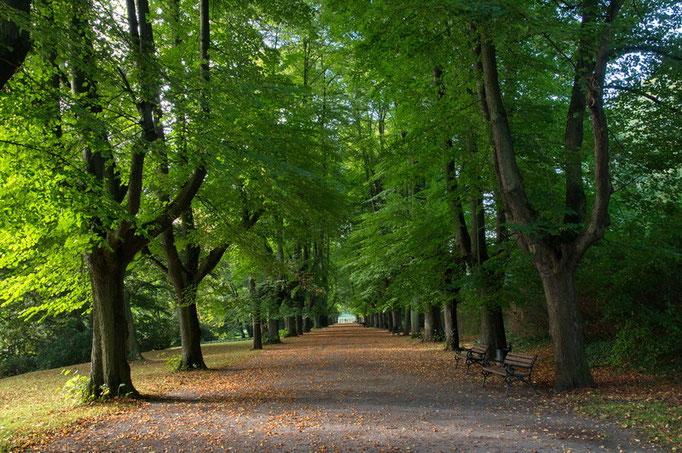 Botanischer Garten Rombergpark, Lindenallee - Früherbstliche Morgenstimmung